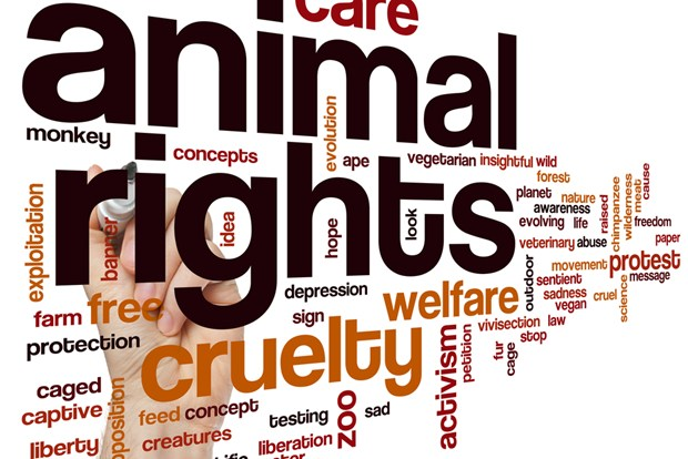 Everything You Wanted To Know About Animal Rights In India