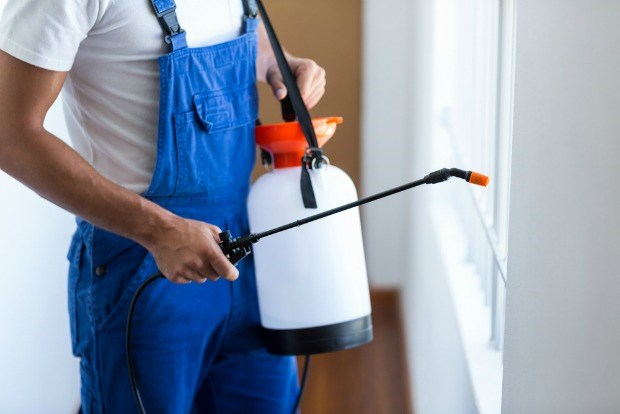What Does An Exterminator Do and How Can He Help You?